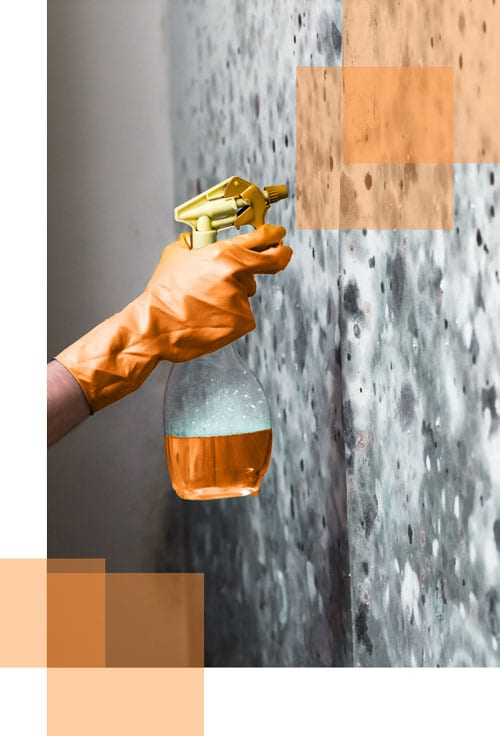 Orange-Cleaning-Mould-Removal